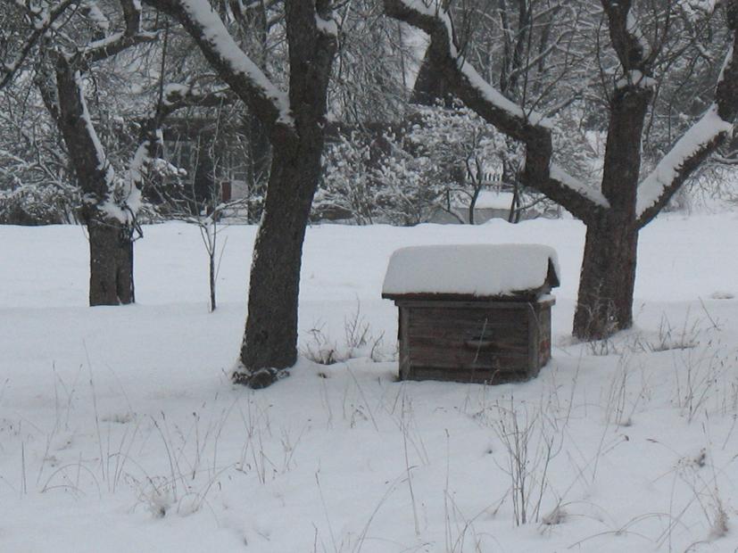 Paramos siekiantys bitininkai sulaukė palankių naujovių