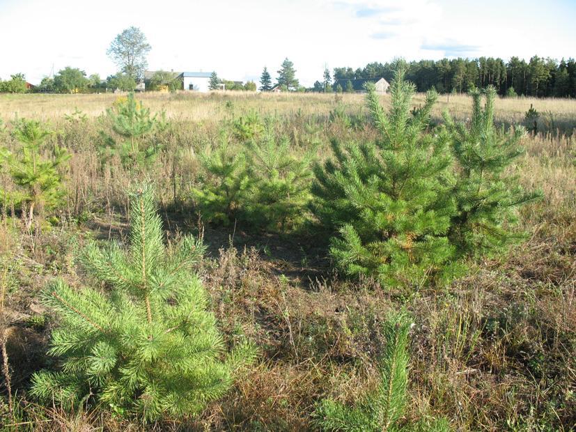 Pasodintas miškas merdinčią žemę prikelia naujam gyvenimui