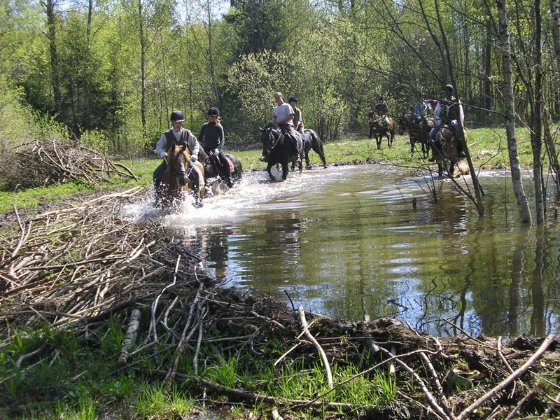 Plungės rajoną sudrebins lietuvių karo žirgų varžybos