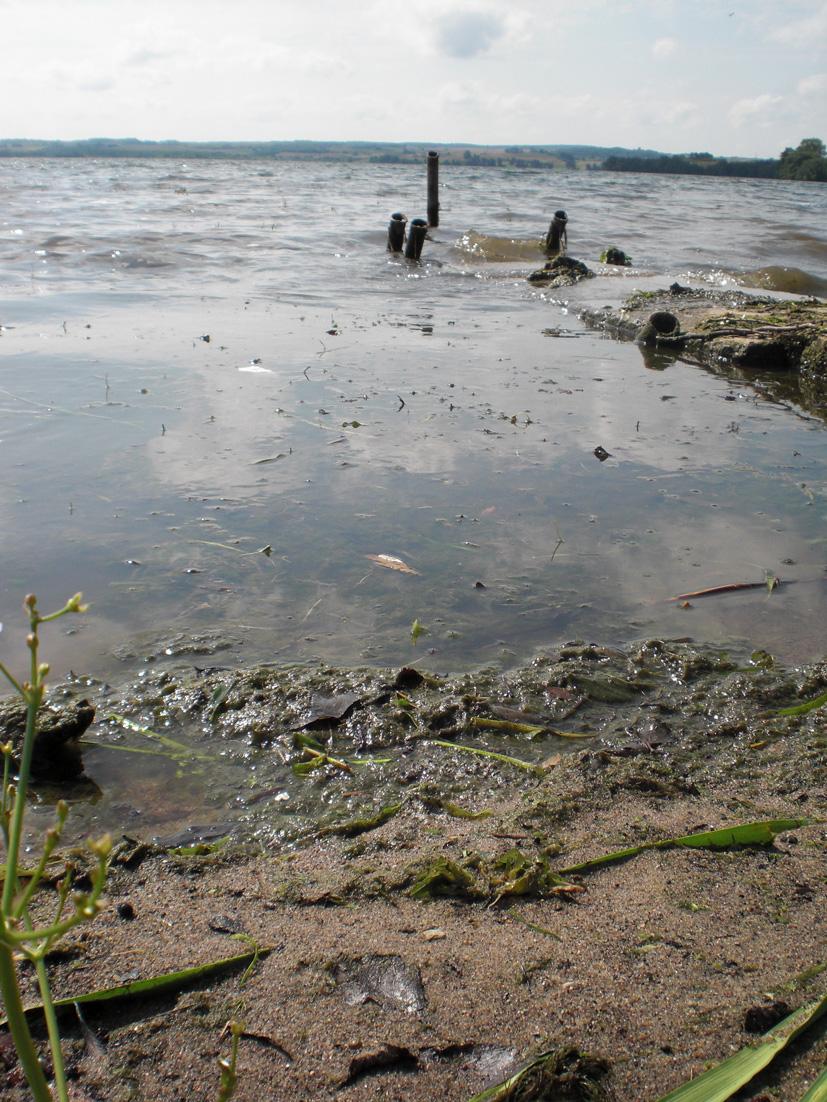 Vieviečiai kenkia ežerui, ežeras – vieviečiams