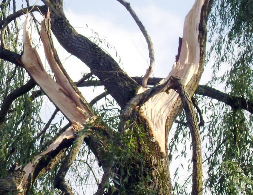 Didžiausi audros nuostoliai – Kazokiškėse