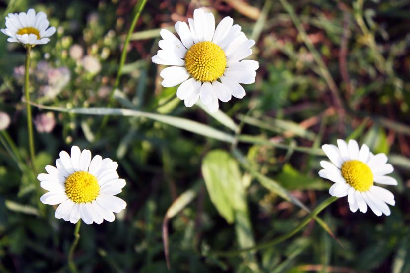 Žolinė – vasaros ir rudens sandūra