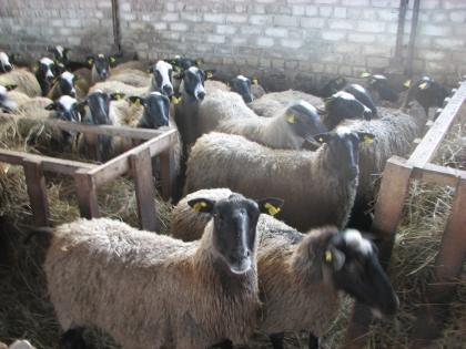 Avininkystė – nelengvas verslas