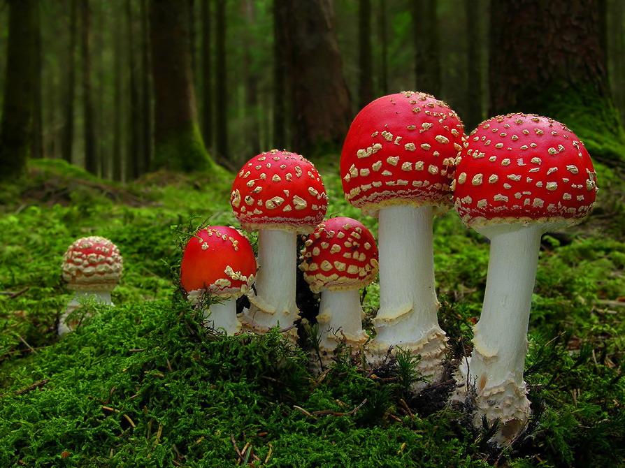 Miškui kenkia ir grybautojai