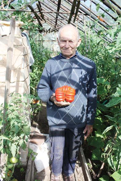Vievietis Juozas Rukšta užaugino pomidorą milžiną