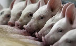 Gyvulių augintojams apie reikalavimus ir taisykles