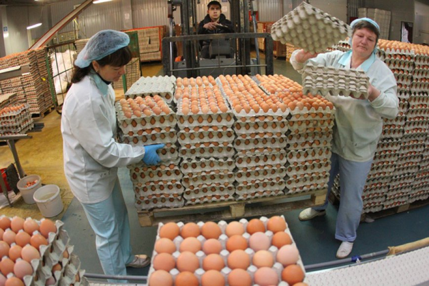 Kokios Velykos be Vievio paukštyno kiaušinių?