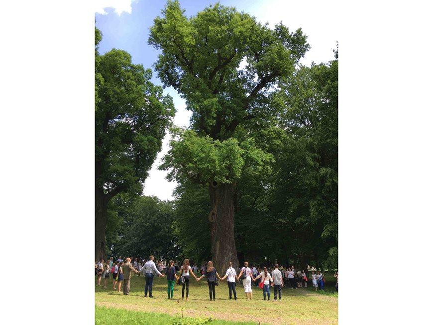 Europos metų medis – Lenkijos ąžuolas