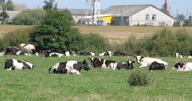 Žemės ūkio ministerija kviečia socialinius partnerius elgtis atsakingiau ir neužsiimti interpretacijomis bei žemdirbių kiršinimu
