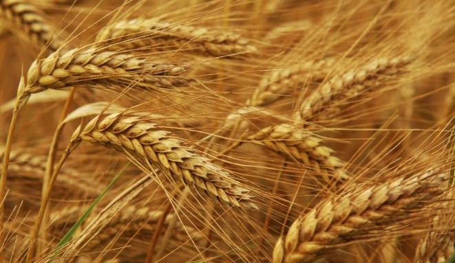 Lietuvos Respublikos žemės ūkio ministerijos skelbimas