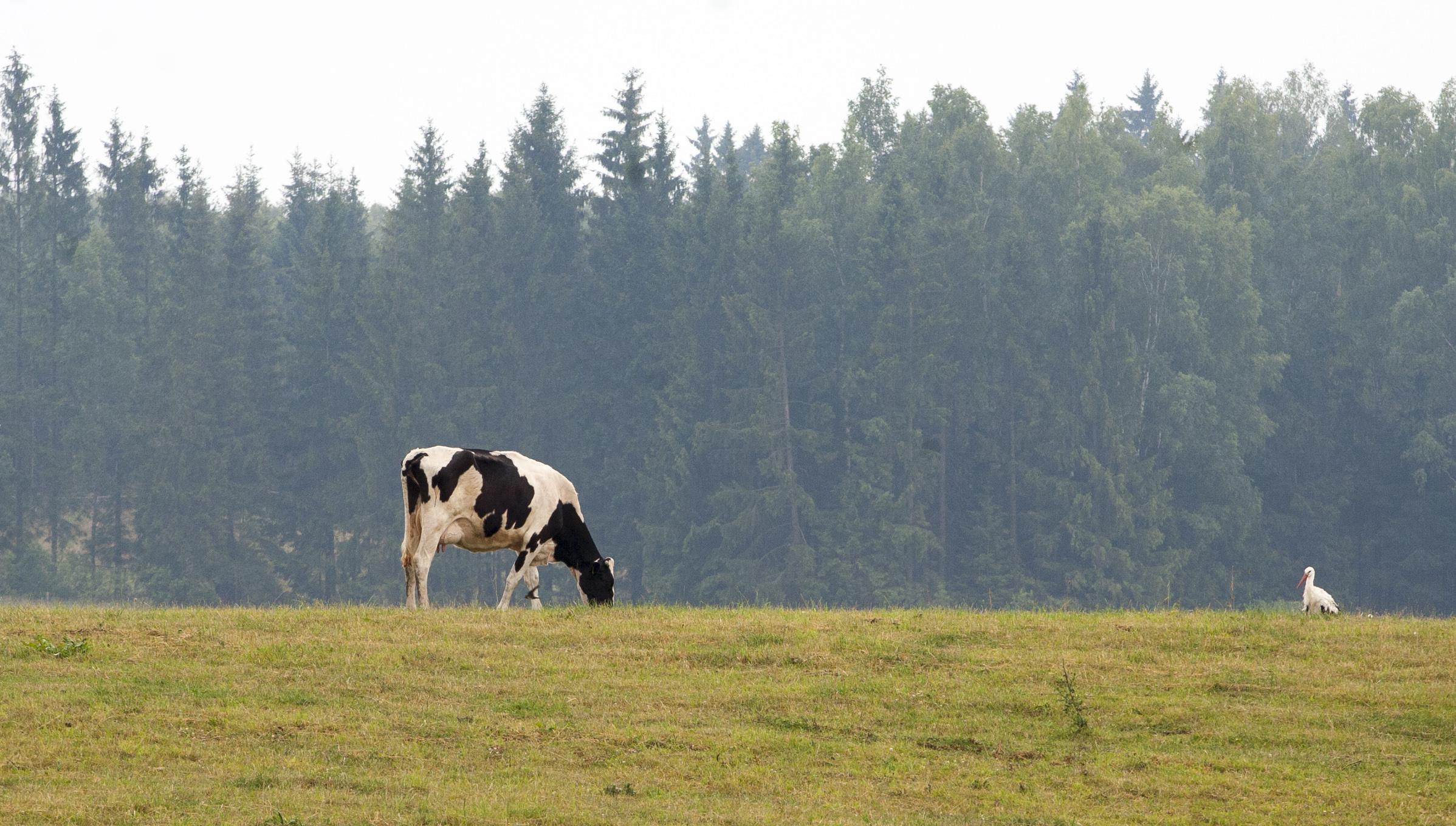 """Priemonės """"Agrarinė aplinkosauga ir klimatas"""" naujovės"""