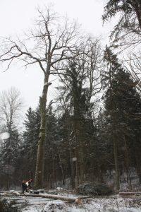 Ten, kur Elektrėnų bendrajame plane pažymėtos rekreacinės zonos, miškininkų planuose pažymėti apsauginiai arba ūkiniai miškai ir juos leidžiama iškirsti