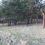 Nuo miško pusės tautodailininkės namus saugo Rūpintojėlis, Namų deivė ir skrendanti gervė