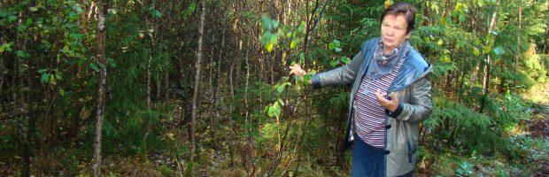 Anot Palmiros Lipskienės, per daug medžių miškams nereikia