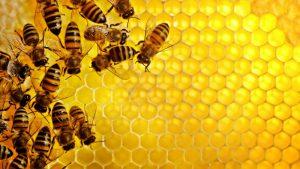 Ne saldu ir piktų bičių vis daugiau...