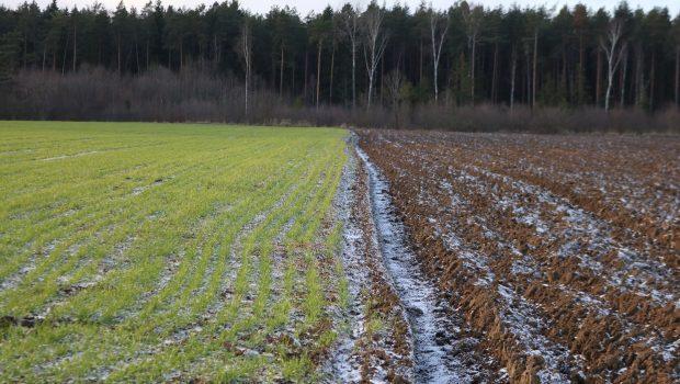 Pasėlius ir augalus nuo rizikų, susijusių su meteorologiniais reiškiniais,  2017 m. draudė 671 ūkis. Apdraustas plotas siekė 201 tūkst. ha.