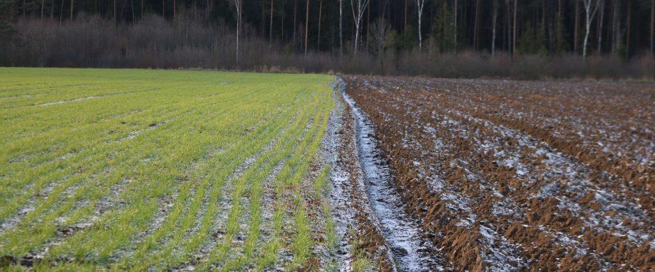 Ūkininkai kviečiami aktyviau naudotis parama pasėlių draudimui