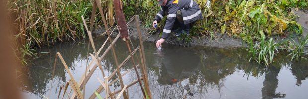 Tyrimas atskleidė, kad teršalai į ežerą patenka intakais ties Liepų, Mokyklos ir Stadiono gatvėmis