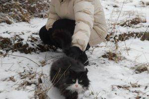 Dainora su kate