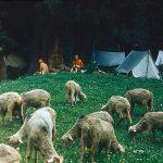 Ala - to stovykla Tian Šanyje, Karakolo tarpeklyje, 2000 m.