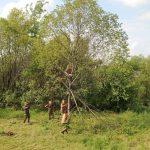 Ypatinga operacija genint medžius patraukė visų dėmesį