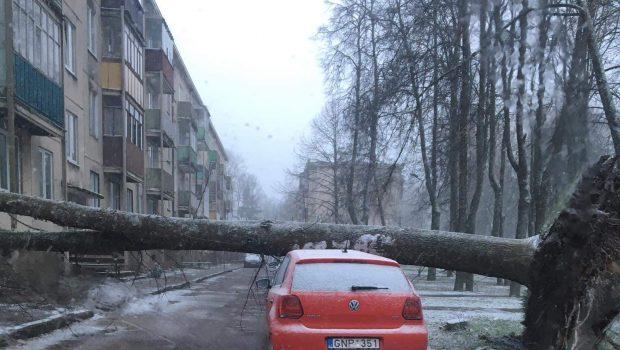 Užvirtus medžiui automobilis liko nepataisomas