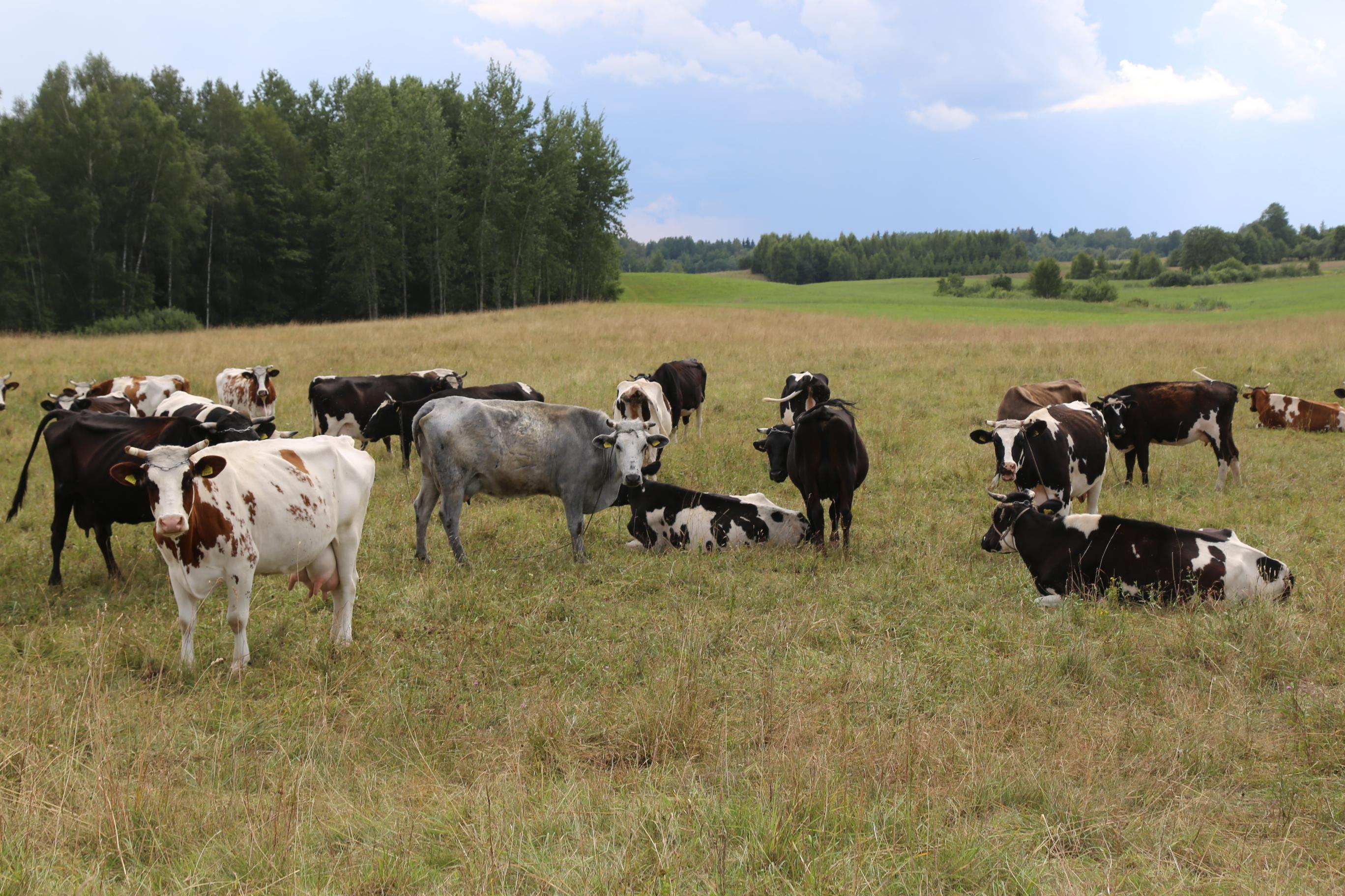 Smulkiesiems pieno gamintojams – galimybė kreiptis paramos