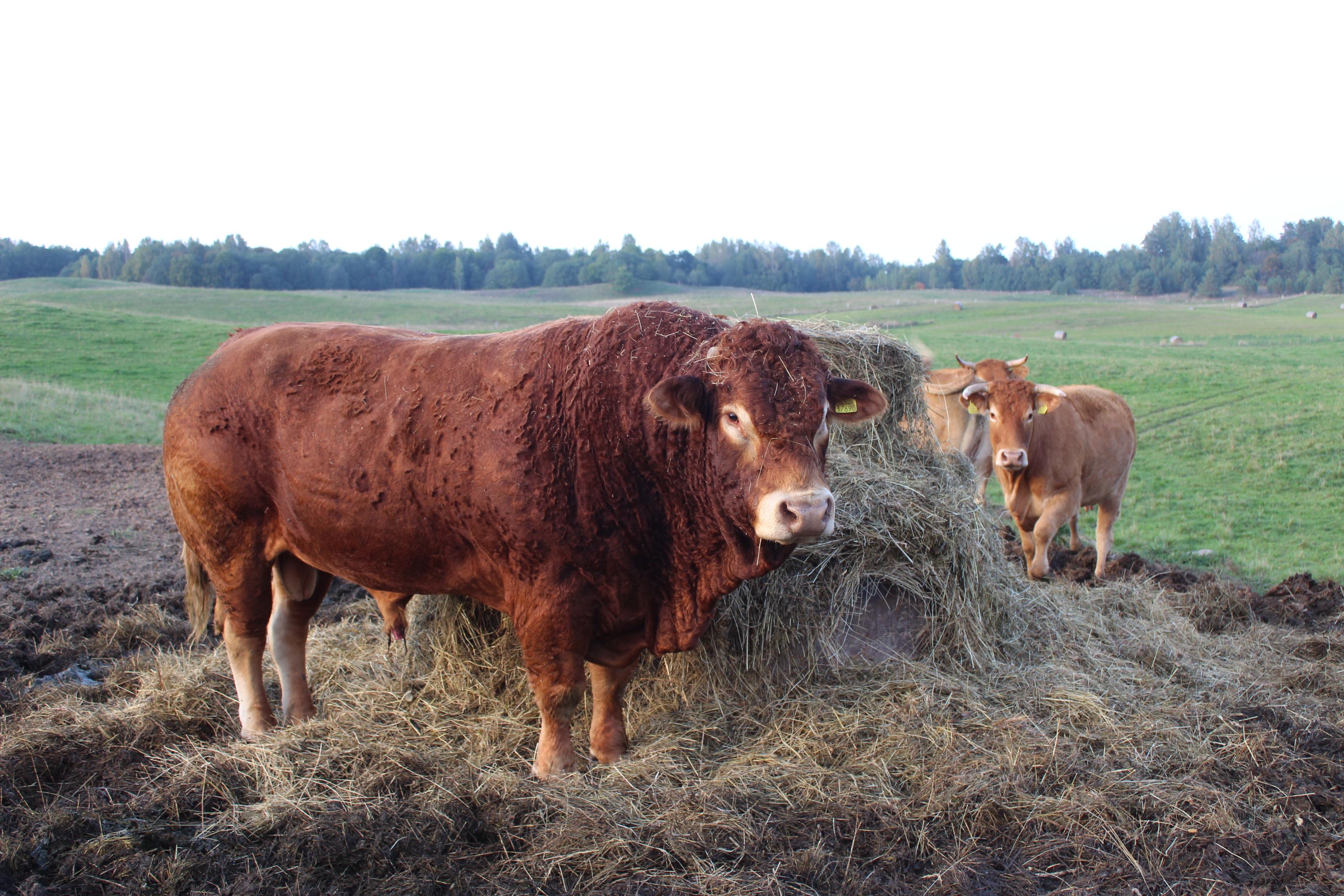 Jauniems ūkininkams parama – didelė paspirtis kurtis