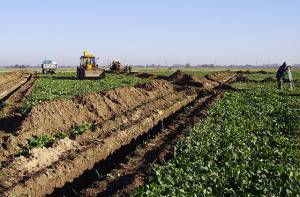Drenažo ir kitų melioracijos statinių nusidėvėjimas siekia daugiau nei 70 proc., tad investicijos į melioracijos sistemą yra būtinos. Etaplius.lt nuotr