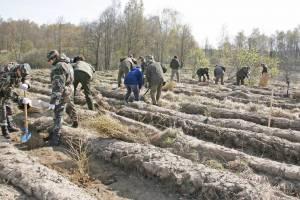 """Iki lapkričio 16 dienos užpildę paraiškas pagal KPP priemonės """"Investicijos į miško plotų plėtrą ir miškų gyvybingumo gerinimą"""" veiklos sritį """"Miško veisimas"""" pareiškėjai gali pasidalyti 9 283 964 eurus paramos lėšų"""