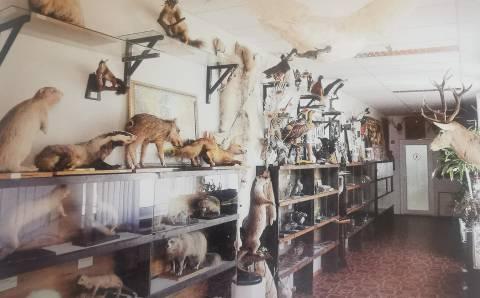 Istorija tapęs Lietuvos kelių muziejaus skyrius: Medžioklės, faunos ir gamtos skyriuje buvo saugoma mamuto iltis