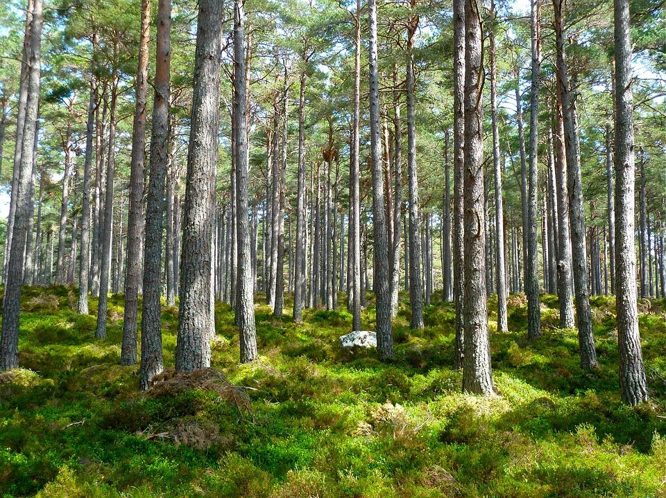 Sprendimas dėl Gojaus miško kirtimo – jau netrukus