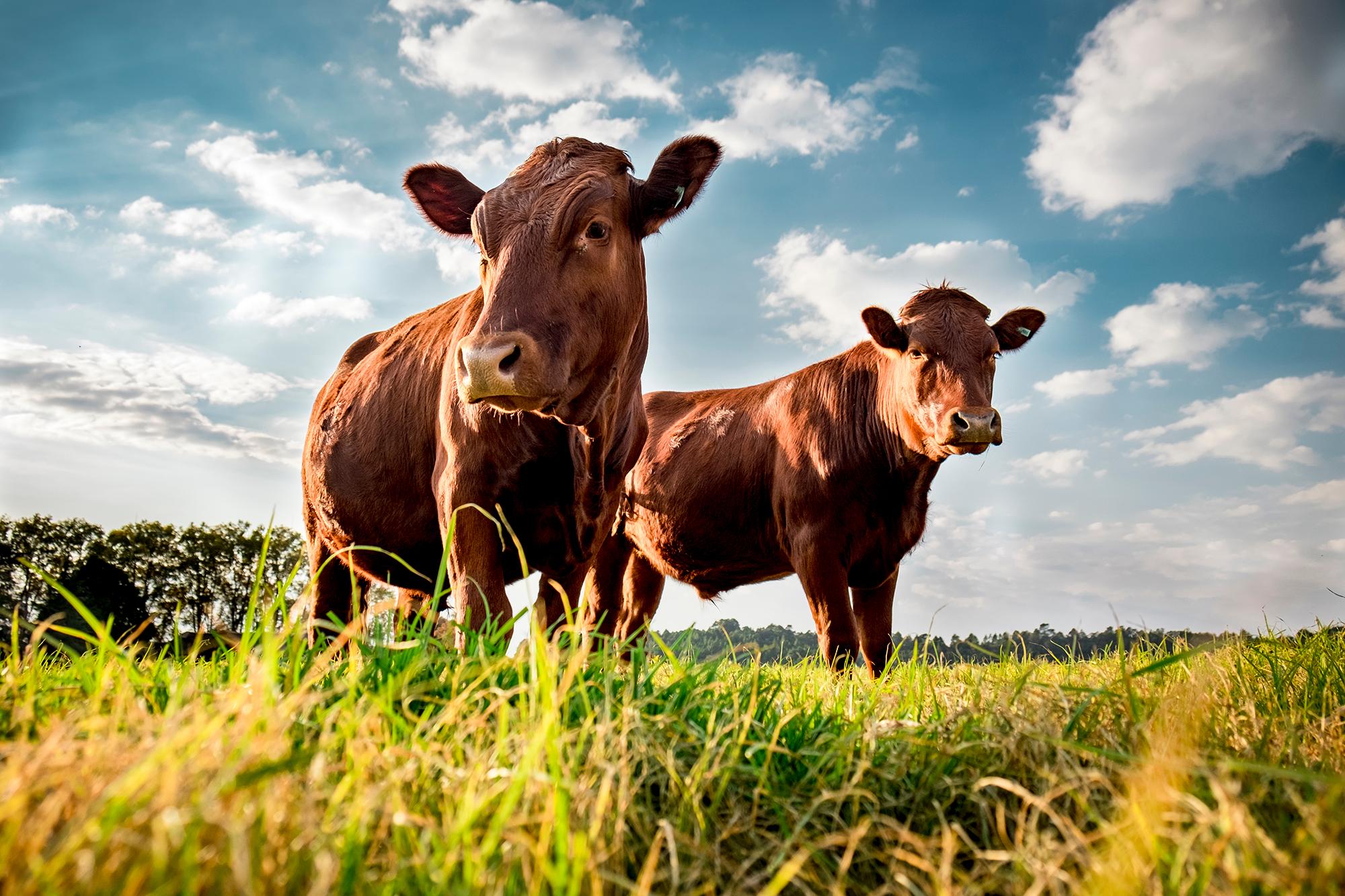 Smulkiųjų ūkių savininkai skatinami bendradarbiauti