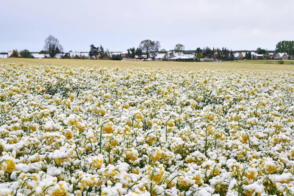 Ūkininkas: pasėlių draudimas – tiesiog būtinybė
